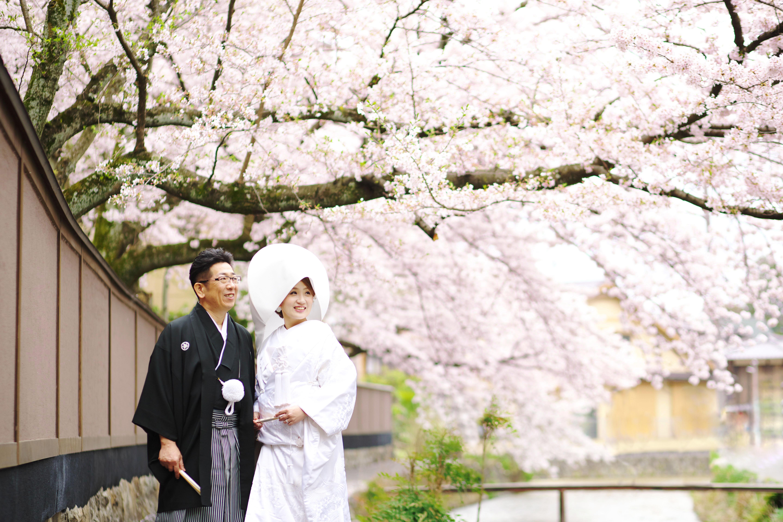 京都東山白川の桜