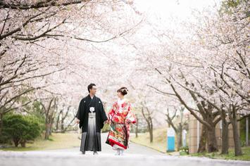 桜ウェディングフォト 福井県で和装ロケーションフォトをお考えの方へ