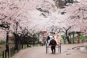 [人気]滋賀県での桜プランご紹介します。ご予約はお早めに