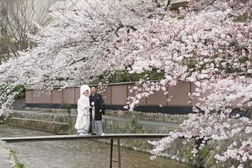 [桜フォト]京都で桜フォトウェディングのカップルレポート