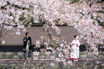 [京都]桜シーズンのご予約はお早めに